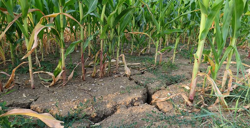 Uz FAO projekat makedonska poljoprivreda otpornija na klimatske promene