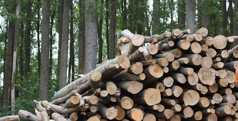 Priboj koristi biomasu za grejanje javnih zgrada