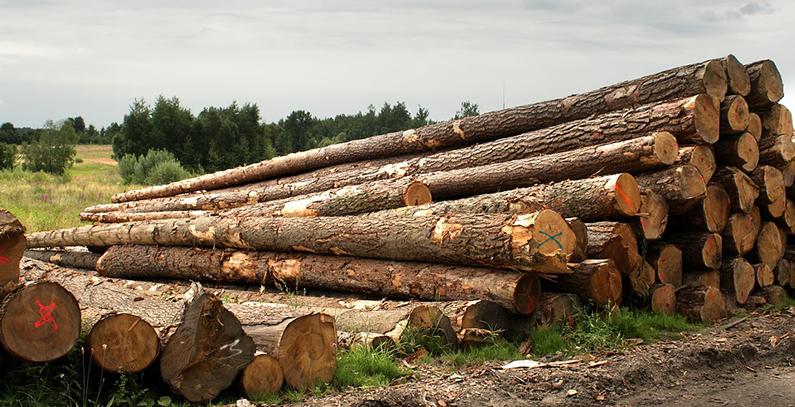 Hrvatske šume objavile tender za prodaju sirovine za kogeneracijska postrojenja