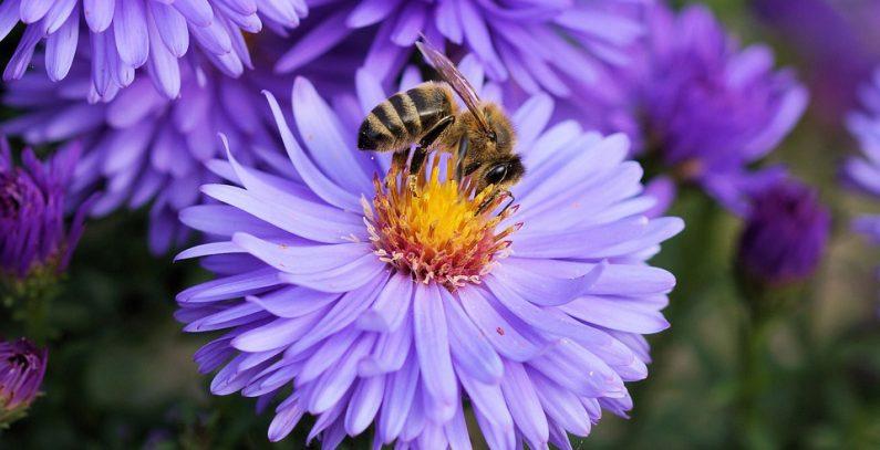 Pčele presudne za proizvodnju hrane i biodiverzitet, a nestaju alarmantnom brzinom