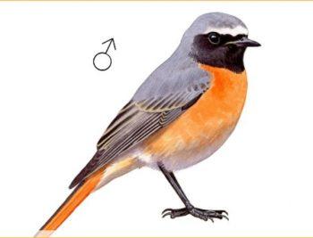 aplikacija ptica