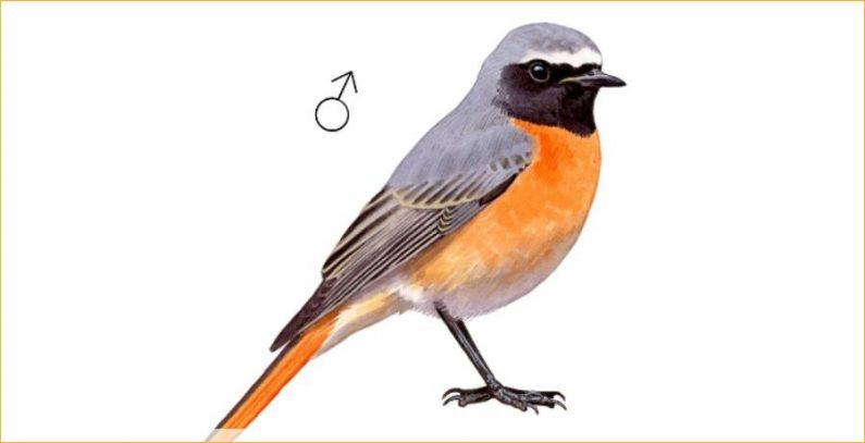 Aplikacije za prepoznavanje ptica, biljaka i drugog živog sveta