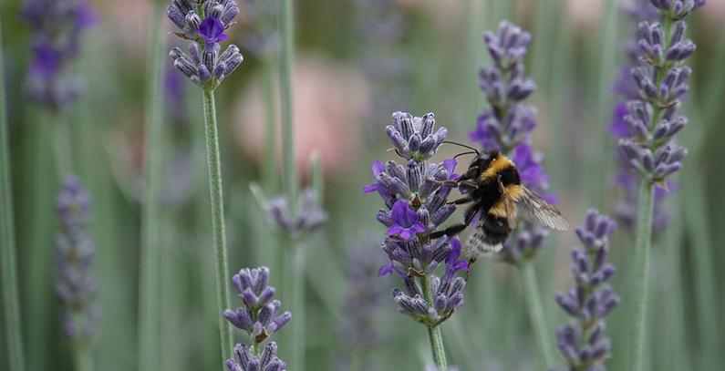 Civilno društvo JIE priprema dokument sa zajedničkim stavom o zaštiti biodiverziteta