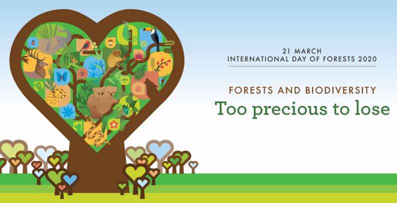 21. mart je Međunarodni dan šuma: Šume su dom za 80% kopnenih vrsta na planeti