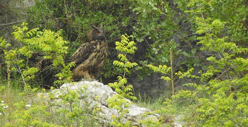 istrazivanje-flora-fauna-neretva-buljina