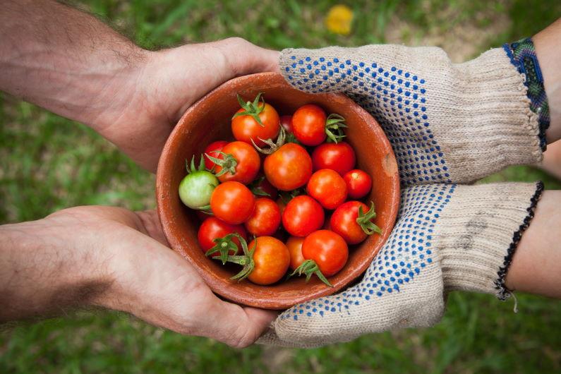 Da se ne baci: finalista takmičenja clim@ Whole Surplus ima rešenje za viškove hrane