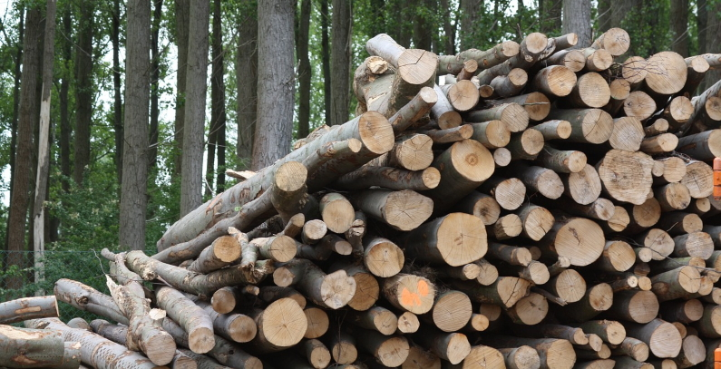Project discussed for biomass usage in heating in Prijepolje