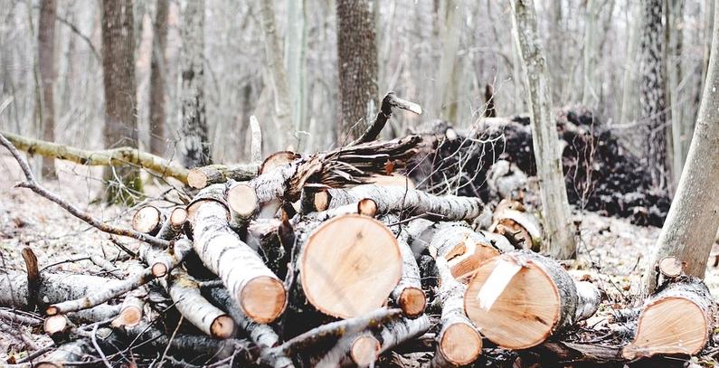 Wood biomass subsidies in Croatia fiercely debated