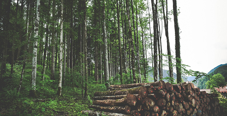 Banjaluka plans construction of wood-biomass heating plant – City Assembly to discuss public call for strategic partner