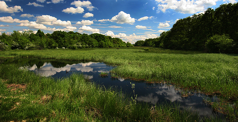 Wetlands in northern Serbia on UNESCO's biosphere reserves list