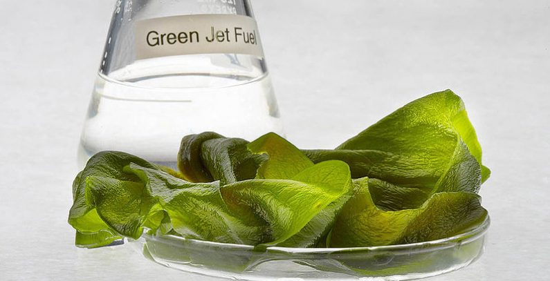 European Commission unveils action plan to develop sustainable and circular bioeconomy