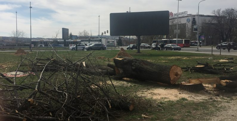 Dismay over tree felling in Belgrade, environmental impact assessment procedure brought into question