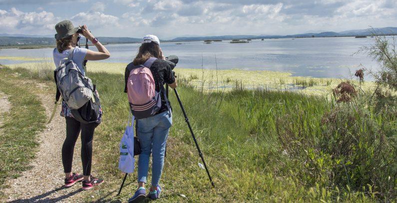 birdwatching Ulcinj Salina