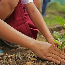 children planting trees