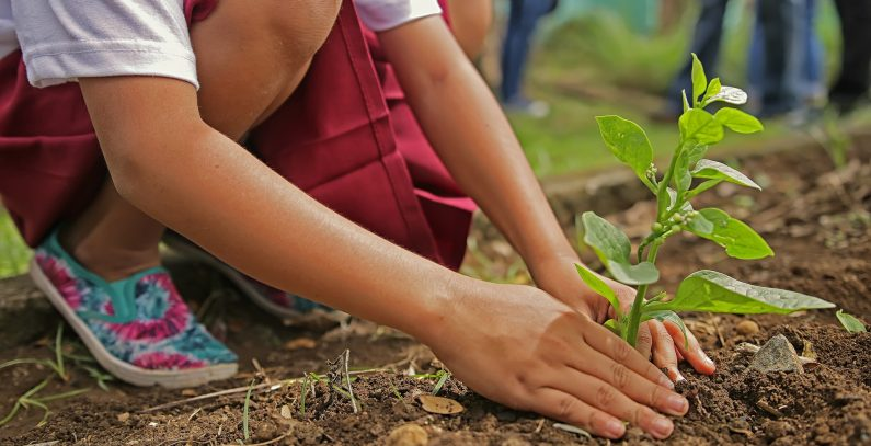 Children starting school in Belgrade to plant their own tree