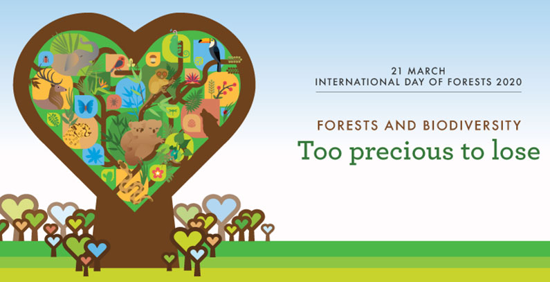 March 21 is International Day of Forests: Home to 80% of all terrestrial species
