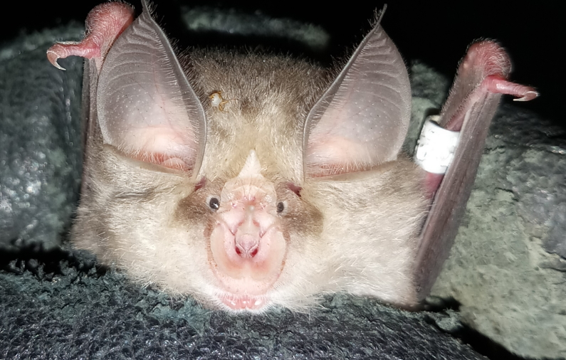 Bats are remarkably useful for humans and nature