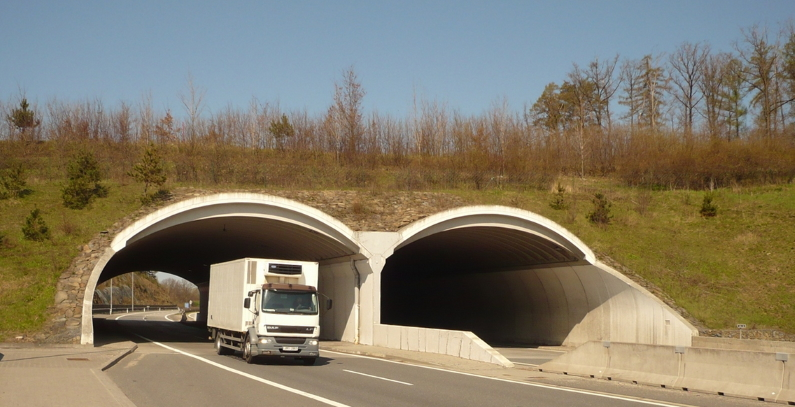 Green bridges across roads and highways saving bears, lynxes, wolves