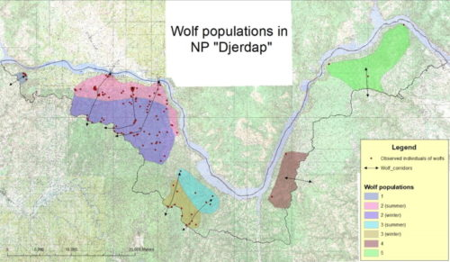 Green bridges bears, lynxes, wolves wolf populations