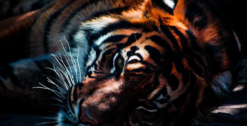 interview-ivonne-higuero-cites-illegal-wildlife-trade