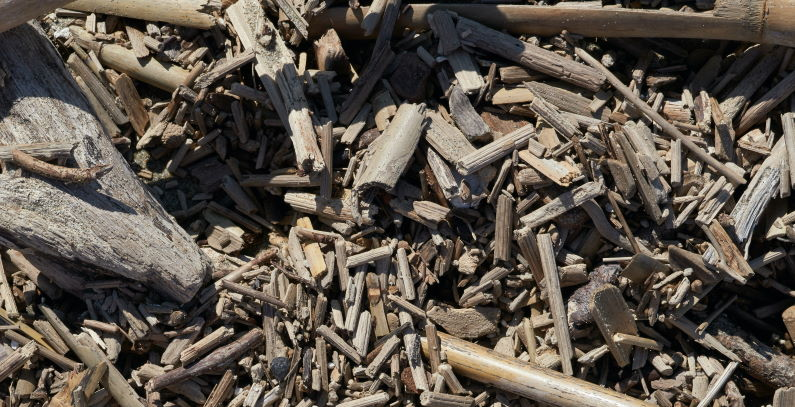 PPC Renewables to make 31 MW biomass power plant in lignite land