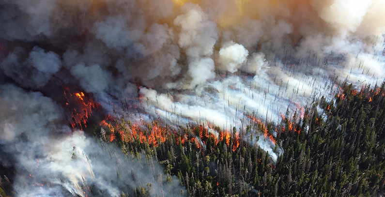 main-sources-of-air-pollutants-forest-fires-nature