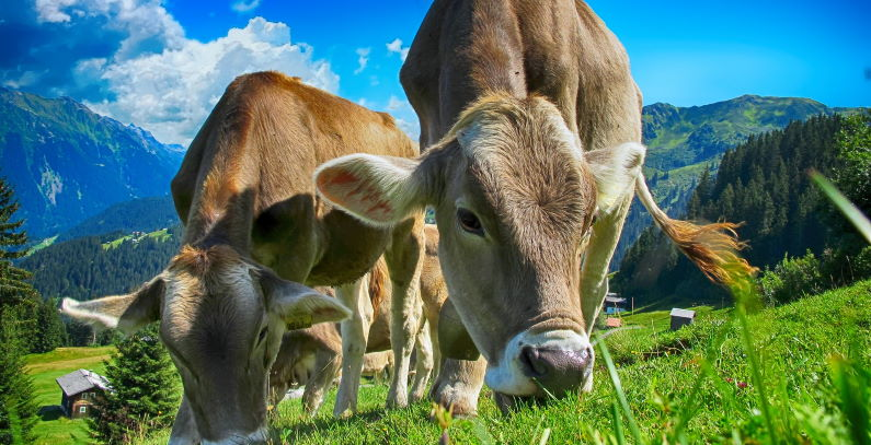 EU adopts methane emission strategy European Green Deal